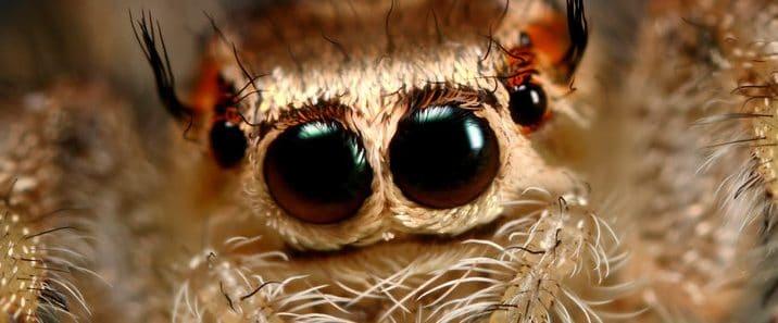 跳蛛—一种可爱的动物
