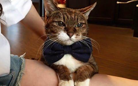 猫真的被驯服了吗