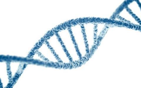DNA为遗传物质的发现