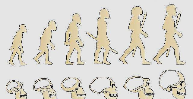 人类起源之海猿说